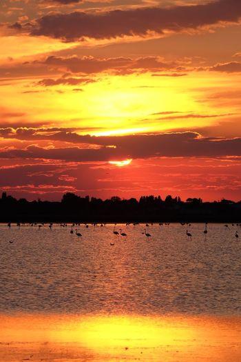 Water Sunset Flamingo Red Beach Lake Beauty Silhouette Sunlight Yellow Romantic Sky Orange Background