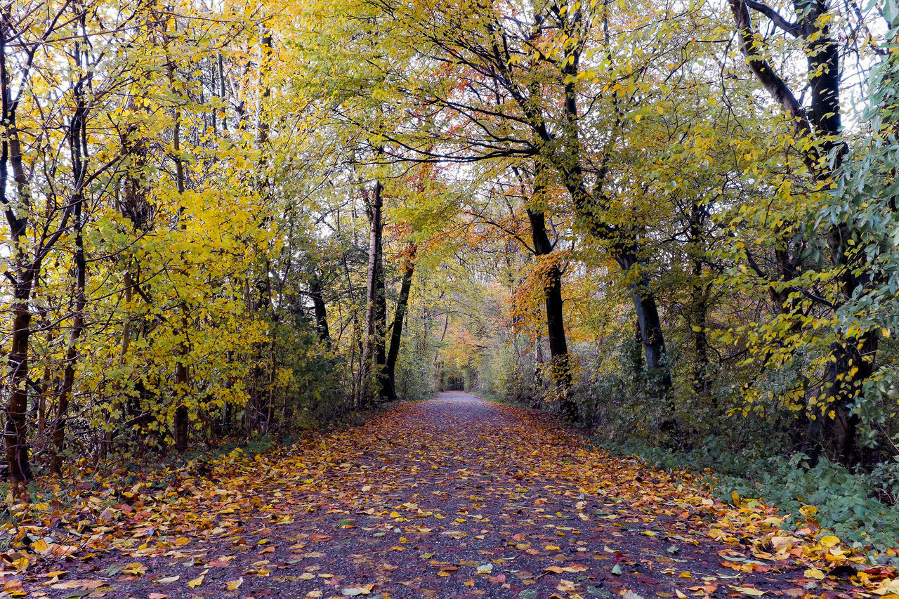 FOOTPATH AMIDST TREES IN AUTUMN