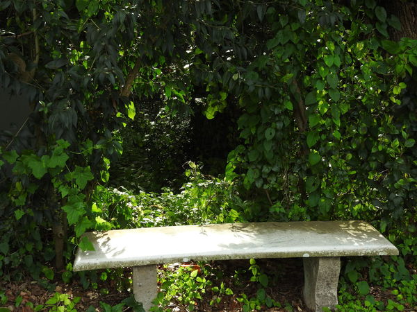 Beautiful Nature Beauty In Nature Bench Bench Caserta Green Color Leaf Nature Nature No People Park Bench Plant Reggia Di Caserta Resting Resting Time Restingtime Showcase March Sun Sun Light Sun Light Through Trees Sunlight Tranquility Tranquility Tree