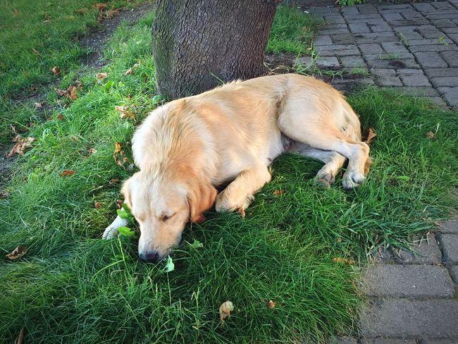 Dog Dogs Köpeklerisevelim Turkey Turkishfollowers Köpek Köpeksevgisi Köpeksevenler Köpekler