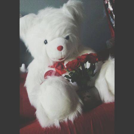 Valentine's Day  ♡