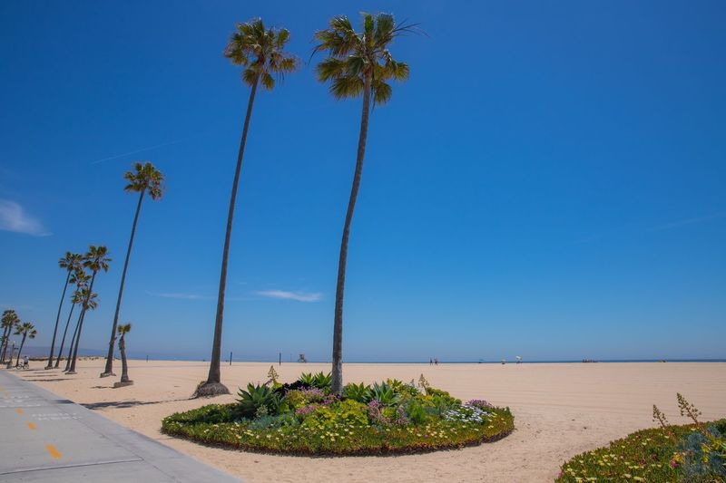 California beach. Tree White Sand Los Angeles, California Canon Beach Landscape California Plant Sky Tree Nature Beauty In Nature Water Blue Clear Sky Land Day Scenics - Nature Tranquility No People Outdoors Sea Tranquil Scene Growth Beach Sunlight Coconut Palm Tree