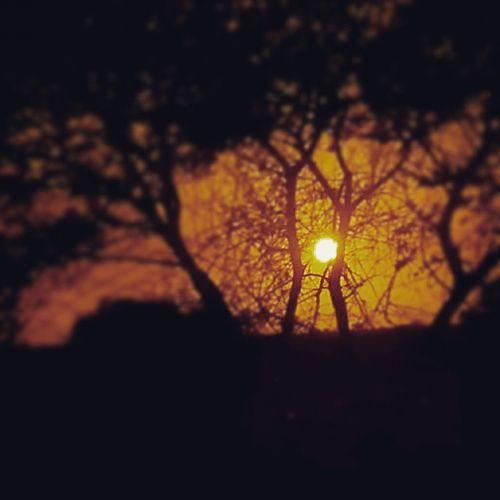 Sun Sunset Beautifull Trees Highway Rajkot Travelling To  Jamnagar Photograpy Picoftheday Instaedit Instapic Instaclick Instagram_jamnagar Instamood TagForTag Tagforlike Fowllow4follow Followme Followforlike Lyk4lyk Likeforfollow Likeforshoutout Likeforme likeforthispic