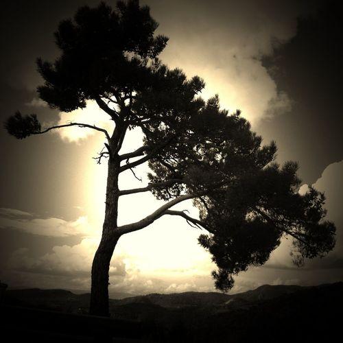 Sunset #sun #clouds #skylovers #sky #nature #beautifulinnature #naturalbeauty #photography #landscape Trees