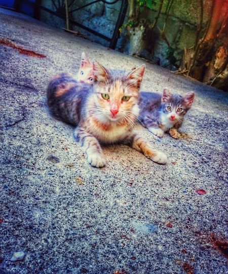 Mother And Child Cats Cat Lovers In Garden Animal Photography Sweet EyeEm Best Shots Taking Photos Eyeemanimal Lover Eye4photography  😻🐱😊