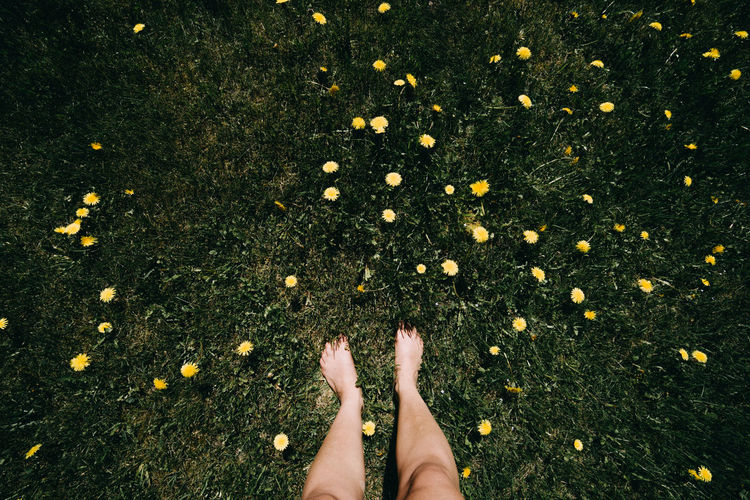 feet enjoying summer field and sun - happy mood barefoot Body Part Daisy Day Directly Above Flower Flowering Plant Freshness Grass High Angle View Human Body Part Human Foot Human Leg Human Limb Low Section Nature One Person Outdoors Plant Real People Standing
