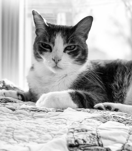 Blackandwhite One Animal Pets Cat Domestic Animals Mammal Animal Themes Feline Domestic Cat Domestic Animal Vertebrate No People Relaxation Snow Looking Away Day Whisker Looking Animal Head