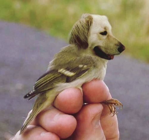 A birddog. Can you imagine being a cat and seeing this flying towards you barking? Oh, don't be under it if it has to drop anything! Pets Bird Dogs Leone Filter