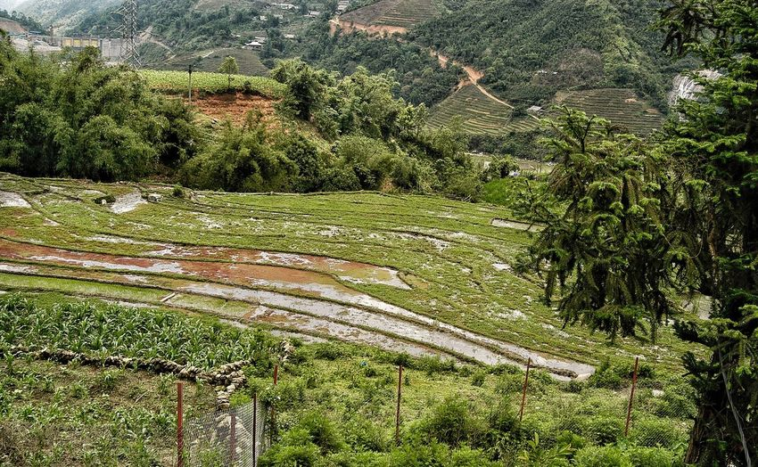 Vietnam Sapa Plant Green Color Full Frame Growth Nature Day High Angle View No People Beauty In Nature Tranquility Land Landscape Outdoors Backgrounds Field Pattern Scenics - Nature Environment Sunlight Rural Scene