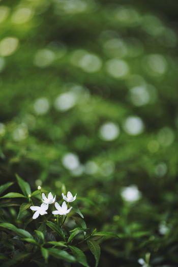 white flower,