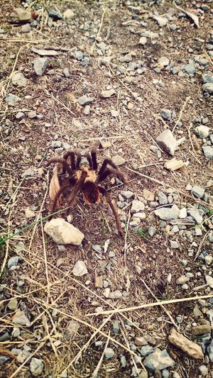 hiking and found a spider check this out