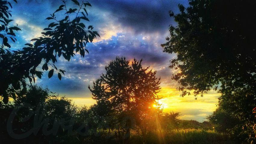 Sunlight Sunrise And Clouds Dawn Of A New Day Dawn Sunbeam Light And Shadow Sun Behind Trees Blue Sky And Clouds Clouds And Sky Sunset Sky On Fire Tree Sunset Silhouette Dramatic Sky Sky Cloud - Sky Woods Moody Sky Sunrise Sun Solar Flare Shining Atmospheric Mood Galaxy Treetop