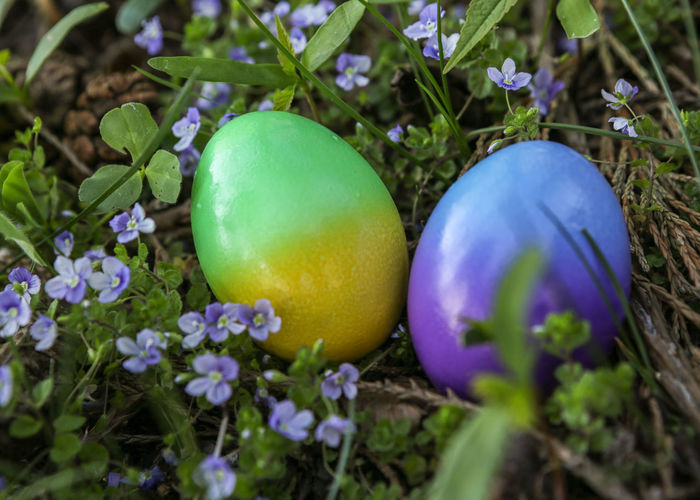 Chickeneggs Easternest Blue Flowers Easter Daylight Photography Object Of Celebration Outdoors Photography Blue And Green Green And Blue Dekoration Celbration Decoration CELEBRATION DAY Easter Eggs Colored Eggs