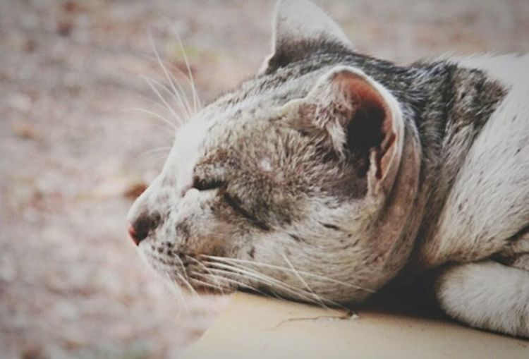 Q Quiet Closeupshot One Animal No Person Sitting In Peace Peace And Quiet Eyes Almost Closed Cat Photography