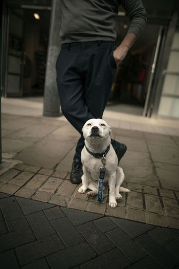 Low section of man with dog standing on footpath