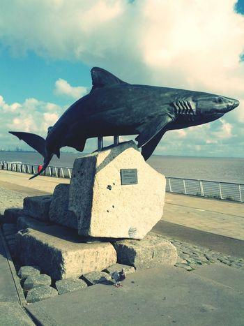 Shark Staue  Hull TheDeep