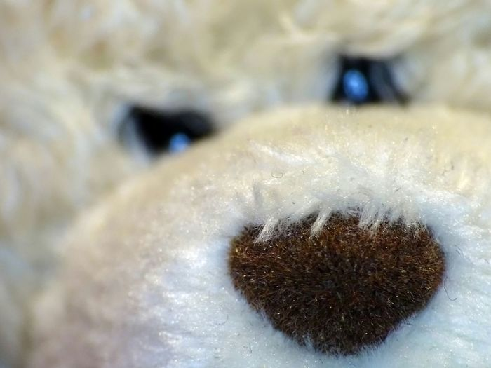 Teddy Teddybear
