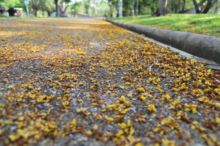 Close-up of yellow railroad track