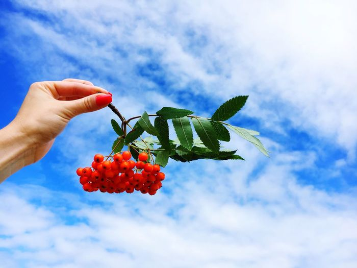 Cropped Image Of Woman Holding Rowanberries Against Sky