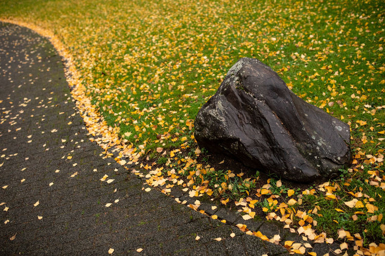 Yellow Nature Flower Flowering Plant Plant No People Day Beauty In Nature Rock Outdoors Solid City High Angle View Road Leaf Autumn Footpath Street Close-up Plant Part Change Natural Condition