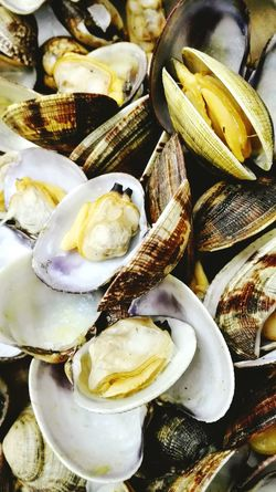 Vongole Seafood Seashell Healthy Eating Food Close-up Freshness Food And Drink No People Organic Food Italian Food Italy Mussles Foodphotography Kitchen Cooking