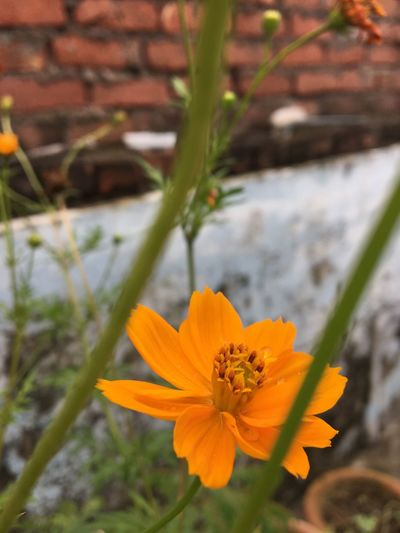 Yellow Flowering Plant Flower Freshness Plant Vulnerability  Fragility Petal Growth Beauty In Nature Inflorescence Flower Head Close-up Focus On Foreground No People Orange Color Nature Pollen Day Yellow