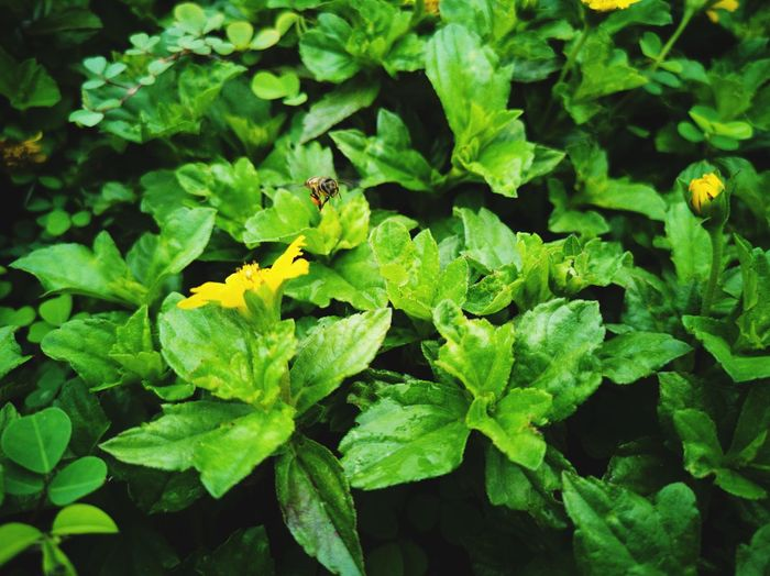 Busy bee Bee Animal Leaf Plant Part Vegetable Close-up Plant Green Color Flower Head Single Flower Pollen Sunflower Blooming A New Beginning