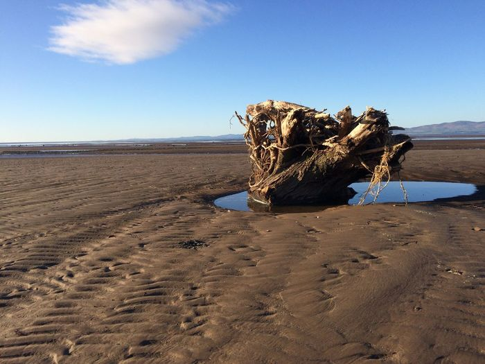Washed up tree stump on beach Landscape Washed Up Beach Nature Day No People