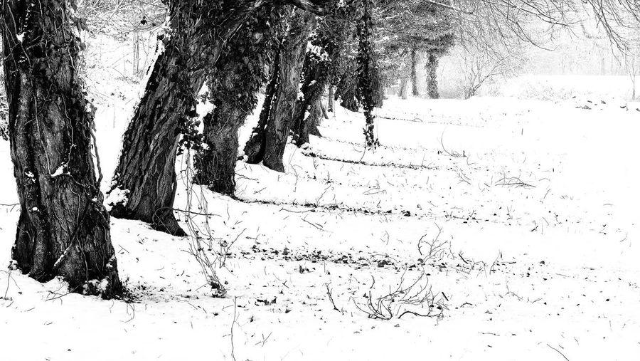 Trees Quiet