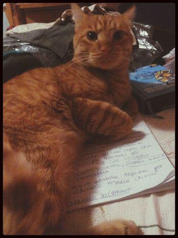 Miao:3É inutile che mi guardii cosi, ti devi spostare sei sopra al mio quaderno! .._.