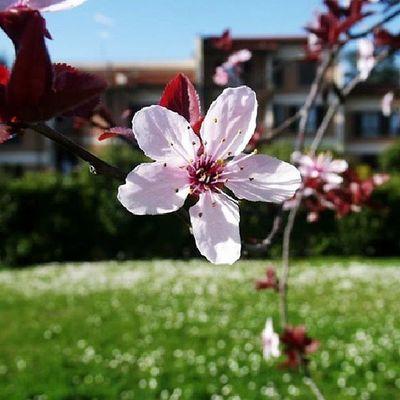 Day 17: flowers Fiera Di Questa Foto apieceof lagalleriadiagosto flower follow like4like