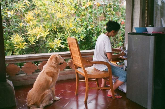 home 35mm Film Analogue Photography Film Photography Filmisnotdead Home Is Where The Art Is Soft Light Golden Retriever Dogs Pooch Dog Sitting Dog Love Refridgerator Preparing Food Pet Photography  Dog And Human Interaction