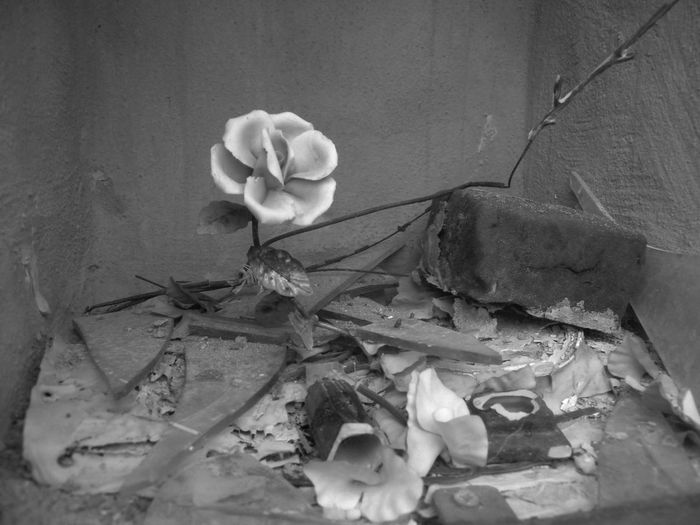 Flower Fragility Petal Close-up No People Blackandwhite Trash Blackandwhite Photography Black And White Black & White Fake Flowers Still Life Composition