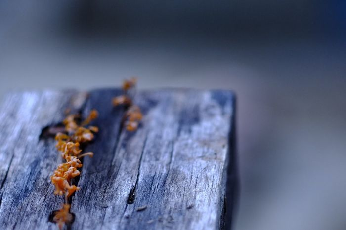 Mushrooms 🍄 on a wooden planks. Wood - Material Close-up Mushroom Mushrooms 🍄🍄 Mushrooms Mushy Mossy Blurred Close Up No People Wet Cool