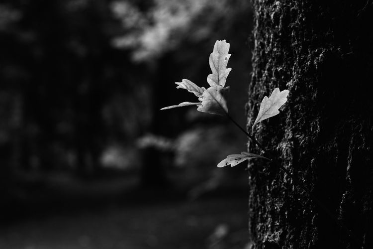 A small growth from a tree caught in dappled light Focus On Foreground Plant Close-up Growth No People Nature Beauty In Nature Outdoors Trunk Tree Trunk Day Tree Fragility Vulnerability  Selective Focus Flowering Plant Freshness Flower Plant Part Leaf