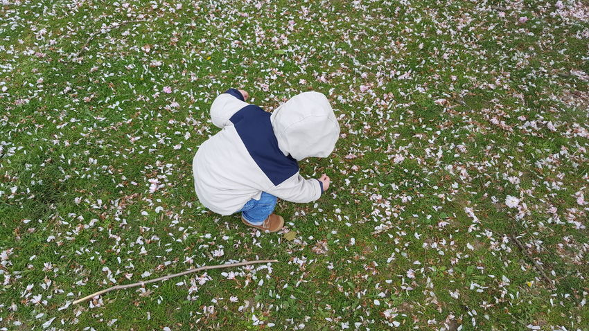 Learning and playing Grass High Angle View Outdoors Nature Child Going For A Walk Spring Pink Petals Blossoms  Blossoms  Fun Growing Up Playing Toddler  Leisure Activity Childhood From My Point Of View Beauty In Ordinary Things Freshness Picking Up Casual Clothing Art Is Everywhere Toddler  The Portraitist - 2017 EyeEm Awards