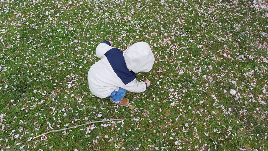 High angle view of boy picking petals fallen on field