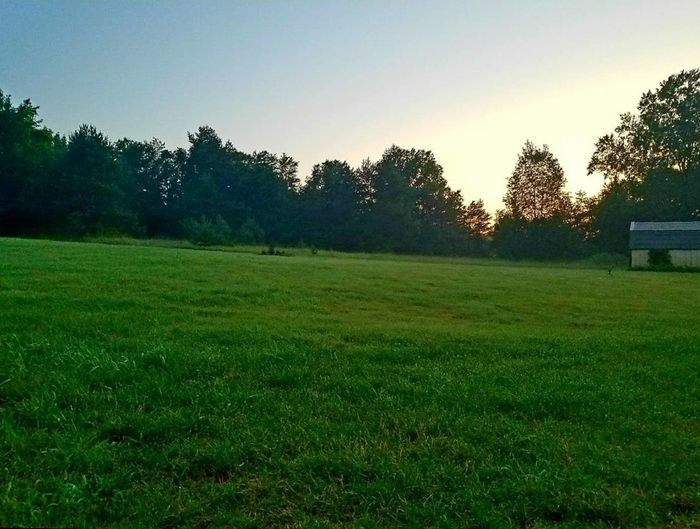 Scenic view of grassy field against clear sky