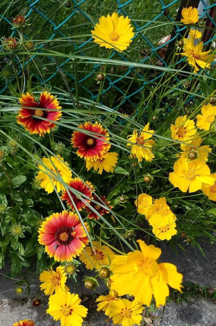 flowering plant, flower, vulnerability, fragility, freshness, plant, beauty in nature, growth, petal, flower head, inflorescence, yellow, close-up, nature, day, no people, high angle view, field, outdoors, botany, pollen, springtime, gazania, flowerbed