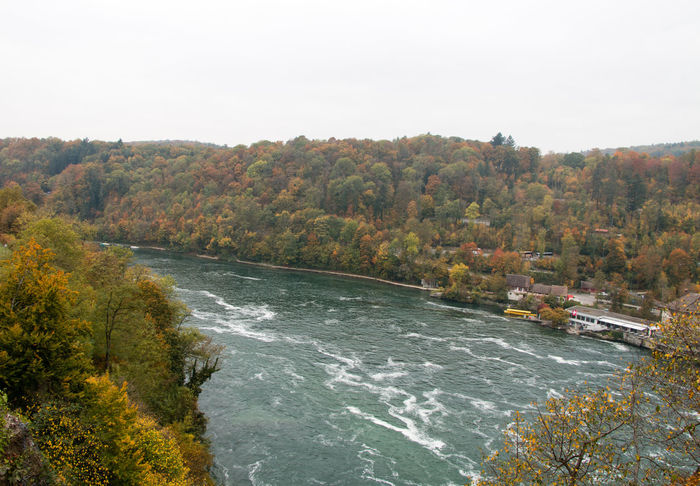 Rhinefalls Switzerland Autumn Beauty In Nature Change Clear Sky Flowing High Angle View Lush Foliage Nature No People Non-urban Scene Outdoors Rhinefalls River Scenics Season  Sky Switzerland Tranquil Scene Tranquility Tree Water