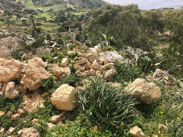 Plants near the Dingli Cliffs, Malta 🇲🇹 Nofilter Malta Dingli Cliffs Cactus Growth Plant Nature Day No People Land Beauty In Nature Sunlight High Angle View Tranquility Green Color Outdoors