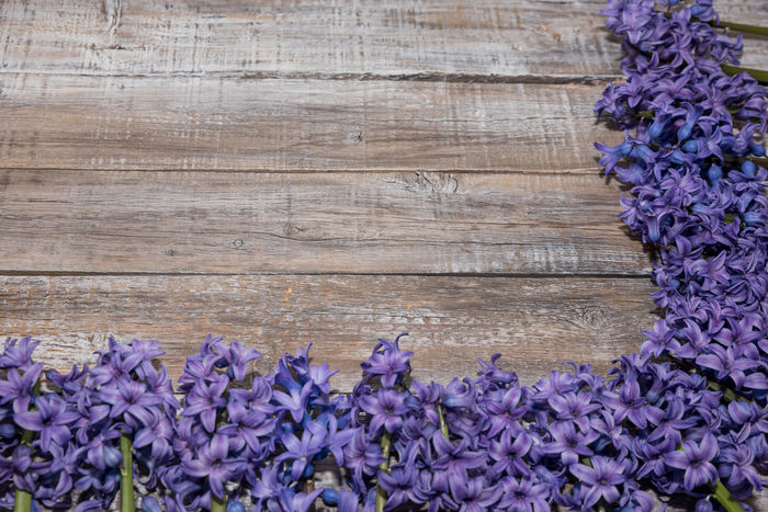 Blooming purple Hyacinthus on vintage wooden board. Love concept Hyacinthus Orientalis Beauty In Nature Close-up Day Flower Flower Head Fragility Freshness Growth Nature No People Outdoors Plant Purple