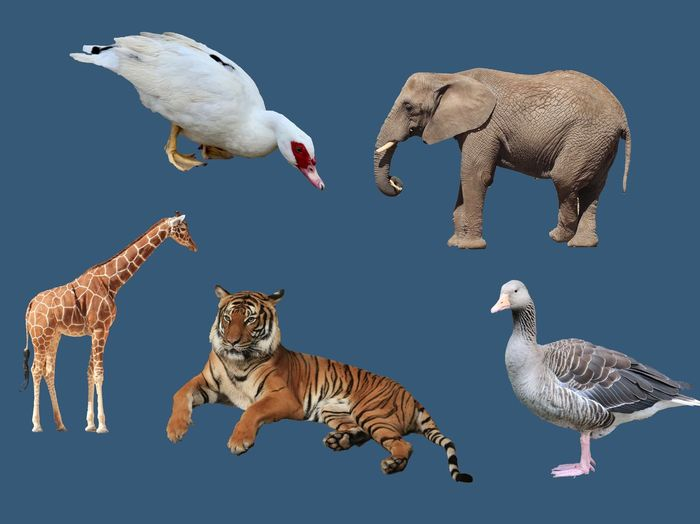 Animal Themes Animal Wildlife Animal Group Of Animals Animals In The Wild Bird Vertebrate Mammal Nature No People Feline Digital Composite Cat Big Cat Flying Three Animals Blue Side View Full Length Studio Shot