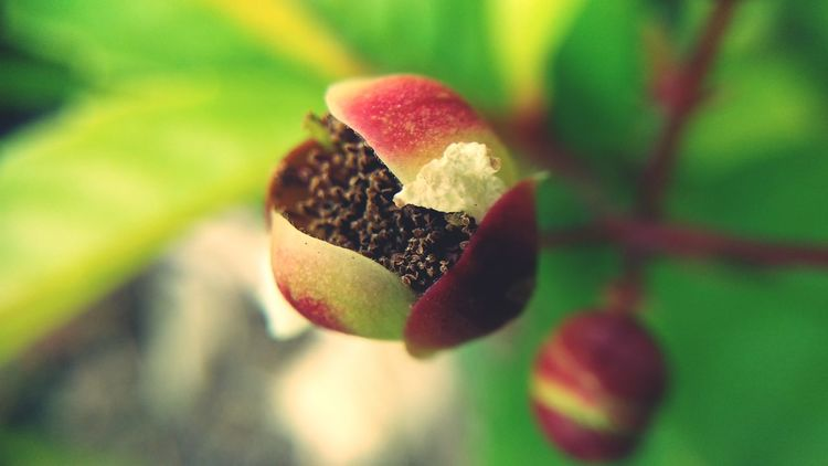 pistil Red Fruit Close-up Plant Plant Life