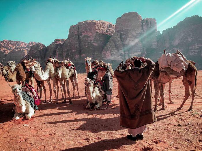 Group of camel on desert against sky