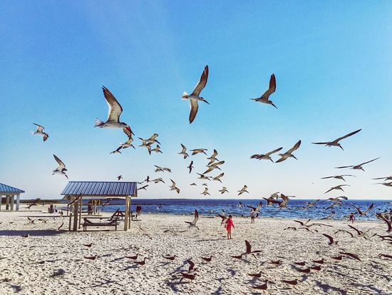 Repost for The Moment - 2015 EyeEm Awards The Traveler - 2015 EyeEm Awards The Action Photographer - 2015 EyeEm Awards The Great Outdoors - 2015 EyeEm Awards Florida Capture The Moment Seagulls Beach Waterfront