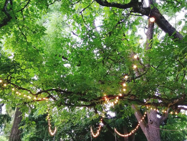 Growth Tree Green Color Nature No People Low Angle View Outdoors Day Plant Branch Full Frame Beauty In Nature Backgrounds Sky Lights