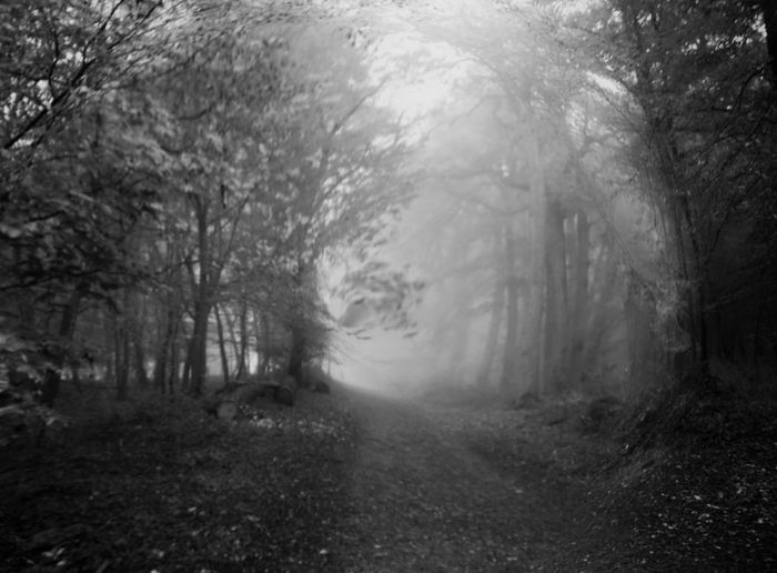 Blackandwhite Black And White Bw_collection Bwphotography Bw_lover Spooky Horror WoodLand Tree