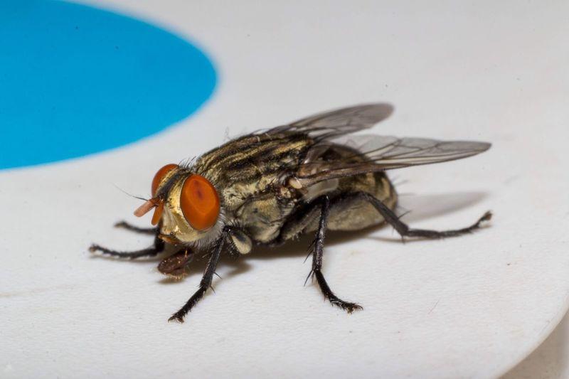 Eye4photography  Invertebrate Insect Animal Themes Animal One Animal Animal Wildlife Close-up Fly Animal Eye Animal Wing