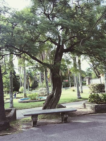 Best place for those who enjoy reading. Tree Growth Park - Man Made Space Nature Day Tranquility No People Outdoors Beauty In Nature Branch Sky